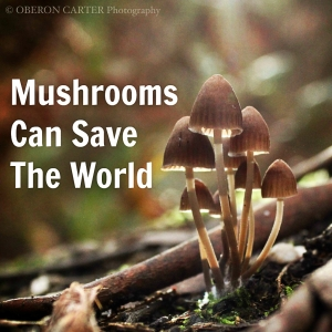 mushrooms-can-save-the-world-oberon-carter-we-are-wildness